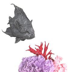 Angelfish (folding~well) Tags: origami fish paper folding angelfish sea ocean