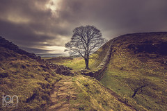Sycamore Gap (ianbrodie1) Tags: sycamoregap hadrianswall northumberland english heritage history old tree iconic landmark path rocks wall roman clouds grey