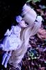 Hide & Seek | Pullip Kirakishou 2014 (·Kumo~Milk·^^) Tags: kirakisho kirakishou kirakishou2014 2014 pullip rozenmaiden rewigged wig rechipped eyechips eyelashes gloss obitsu doll junplanning groove anime manga