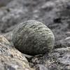 Rond - Round (naturum) Tags: 2016 autumn bossosjohka fall geo:lat=6810605551 geo:lon=1833717942 geotagged herfst höst kungsleden lapland lappland norrbotten rond round rund sapmi sápmi september steen sten stone sverige sweden zweden norbotten