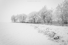 All in a row (Premysl Fojtu) Tags: hermanice czechrepublic winter snow frost trees blackandwhite monochrome bw landscape simple composition canon 5dmkii ef1740