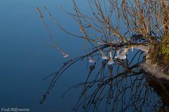 _DSC6764 f (Fooß) Tags: wasser spiegelung strauch natut eis winter flus mosel