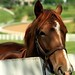 Lexington Kentucky - Donamire Farm She's a Beauty