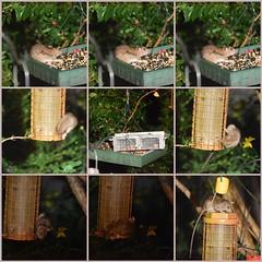 fdsflickrtoys rat mosaic birdfeeder