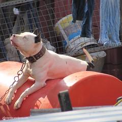 Good morning after all... (Maricarmen Islas) Tags: dog pet sun sol perro mascota