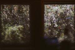 View From my Window (uberblake) Tags: from trees baby blur tree green window nature vintage lens view bokeh shift edge 80 tilt viewfrommywindow flickrfriday my vsco