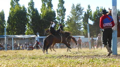 Doma - Crueldad (feder77) Tags: caballo animal crueldad barbarie asco paisano gaucho persona