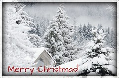 Merry Christmas! (bonniecairns1) Tags: christmas merrychristmas christmas2016 bonniecairns snow snowfall canada weather nikonphotography landscapephotography britishcolumbia winter tricities coquitlam