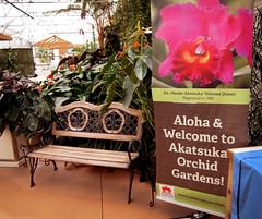 'Volcano Queen' Orchids  --  Hawaii (JFGryphon) Tags: volcanohawaii orchids akatsukaorchidgardens bench volcanoqueen
