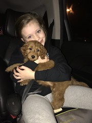 Gabby and Chewy II's Penelope with her new family!