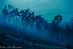 Hindhead Winter Mist (broadswordcallingdannyboy) Tags: hindhead surrey nationaltrust january mist trees englishcountryside fog nature landscape englishlandscape canon eos7d wideangle dusk mood leonreilly leonreillyphotography canoneos mistylandscape foggy foggylandscape with atmosphere