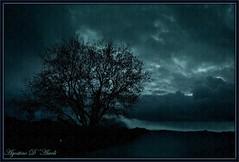 Paesaggio in blu - Gennaio-2017 (agostinodascoli) Tags: art digitalart digitalpainting photoshop photopainting paesaggi landscape alberi agostinodascoli mandorlo piante cielo cianciana sicilia nikon nikkor texture nature