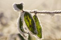 a foggy nights work (leaving-the-moon) Tags: 2016 201612 baden deutschland germany goodlight kraichgau raureif sweethome whitefrost winter