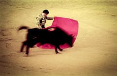 img037 (Fotograf Jonas Nimmersjö) Tags: bullfight spain sevilla bullfighter bull cruel