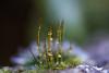 DSC_9368 (xav_roberts) Tags: macro closeup dew nikonv1 nikonft1 nikon sigma105mmf28mm water droplets morningdew rain raindrops