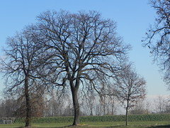 DSCN7616 (Gianluigi Roda / Photographer) Tags: lateautumn earlywinter december 2011 countryside trees landscapes