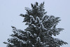 Snow Day - Hillsboro, OR US (nikname) Tags: snow snowscenes snowday winter snowybranches snowytreeswestcoastwinter oregonwinter snowing snowfall
