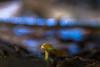 IMG_7211 (::Lens a Lot::) Tags: leica hektorp2 85mm f28 refitted projection lens paris | 2017 mushroom closeup macro bokeh field dof blue depth
