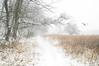 Winter Woodlands (floralgal) Tags: nature ryenewyork marshlandsconservancyryenewyork westchestercountynewyork newyorklandscape winterinryenewyork snowingatmarshlandsconervancy woodlands wetlands naturepreserve ryenewyorknaturepreserve