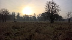 Photo of Bushy Park Deer Morning