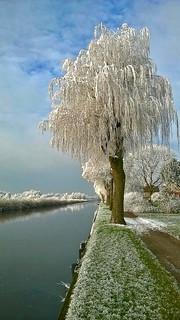 frozen tree* (144014)
