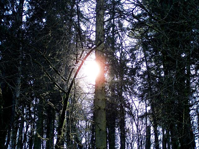 Sun Split Trees