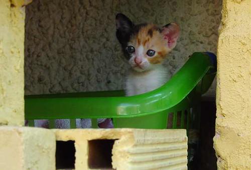Post de gatos de una taringuera