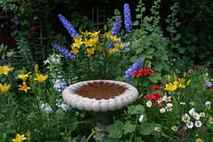 Birdbath and delphinium (thegardencottagebnb) Tags: festival gardens for utah birdbath cottage bb bedandbreakfast mygarden delphinium flowergarden shakespearean gardenflowers historichomes cottagegarden enchantedgarden gardenstatuary httpwwwthegardencottagebnbcom gardeningforfun cottagegardens myfavoritegarden bedandbreakfastincedarcity thegardencottagebedandbreakfast picturesofcottagegardens imagesofcottagegardens photosofcottagegardens gardenvoices flickrgardens graciousgardens cottagegardenpictures cottagegardenphotos cottagegardenimages cedarcitybedandbreakfasts bedandbreakfastsincedarcityutah festivalzionnationalparkbrycecanyonnationalpark lodgingincedarcityutah hotelsincedarcity cedarcityshakespearfestival lodgingfortheutahshakespearefestival thegardencottagebnb