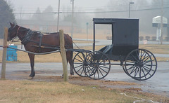 Amish Buggy - by cindy47452