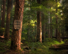 in wildness is the preservation of the world (manyfires) Tags: trees green nature oregon forest woods hiking pacificnorthwest wilderness wildness bullofthewoods xynw08landscapes