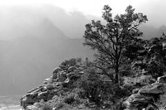 zion canyon rain (rappensuncle) Tags: bw blackandwhite zion utah greyscale photo scan 35mm trix hc110 afterthestorm rain clouds fog haze film analog