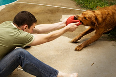 Ball Fight (CarbonNYC) Tags: dog man game male me animal goldenretriever ball pull play d70s canine retriever tug tugowar carbonnyc carbonnycme