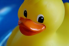Cheeky Duck (frielp) Tags: plastic bath duck yellow blue toy water