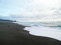 Oregon Seafoam