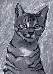 Tabby Cat on Gray
