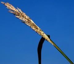 45 degrees (mimbrava) Tags: sky grass topv111 ilovenature interesting seasons c15 mimbrava ilikegrass setplantsleavesrootsbudstreesfruitmushrooms