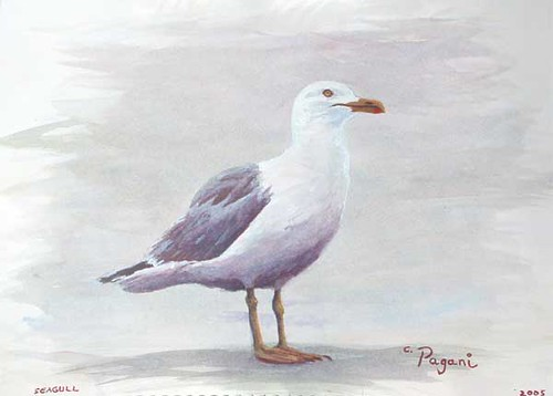 Oregon Seagull Painting