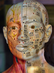 street surrealism #2... (bruce grant) Tags: sculpture brown newyork model chinatown heads acupuncture cabeas anatomical meridians streetsurrealism