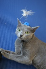 Kitty Seuss (DantesFedora) Tags: cats drseuss dinah