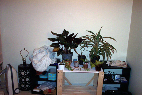 0925 2nd room plants