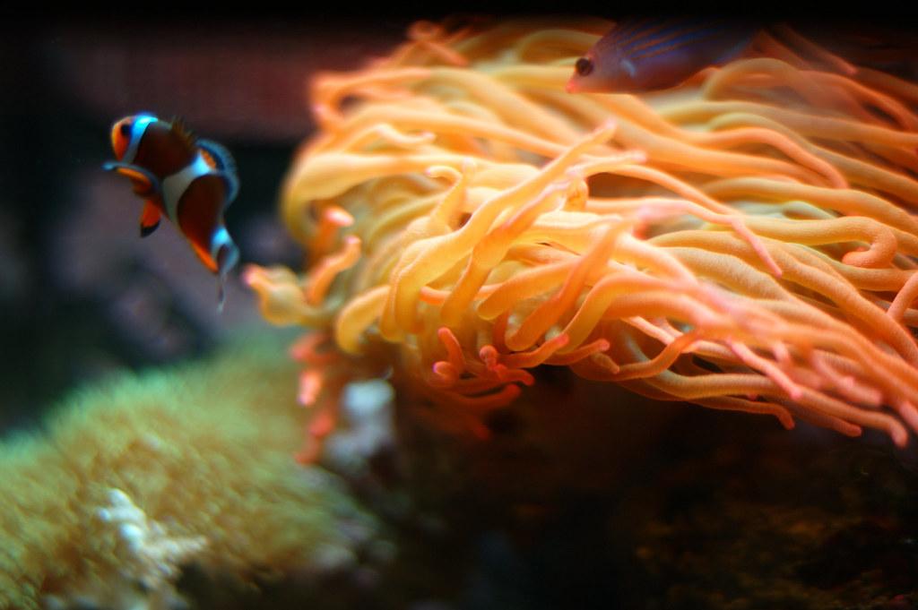 Nemo at Sea
