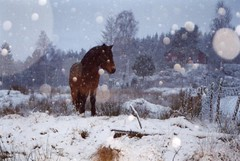 Winterland (Anja.2012) Tags: christmas winter horse holiday snow film topf25 animals norway night evening december kodak 200iso
