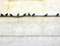 pigeon line (loungerie) Tags: muro bird birds topv111 wall wire pigeon pigeons nine line loveit alist napoli naples minimalism copertina nove interestingness2 linee piccioni themenegativespace winnerflickrsweeklythemecontest ie2007boundaries–1 ie2007boundaries ie2007boundariesloungerie tccomp129