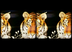 track002 (lucidhouse) Tags: blockheadd dvd album music by cavelight lucidhouse screengrabs audio visual stereo tiger