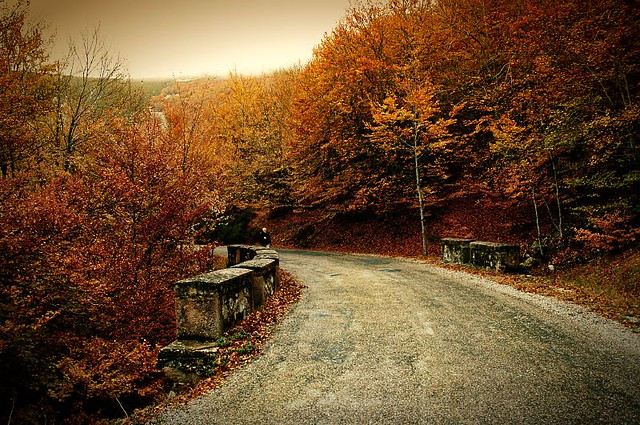 A road through fall