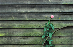 . ' Constable Country ' - series, part (ii) - Granary rose . (3amfromkyoto) Tags: wood uk pink england green english texture rose rural landscape iron scene rim granary flatford 3amfromkyoto flickr:user=3amfromkyoto