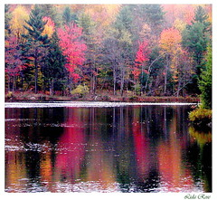 Rainy day reflection (Lida Rose) Tags: autumn trees red lake color colour reflection fall nature topf25 wow top20favorites ilovenature interestingness seasons gutentag natur 100v10f 500v50f top20hallfame 1000v interestingness6 lidarose 1000v30f explore25jun06 world100f