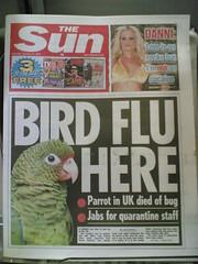 polly want a cracker? (robinhamman) Tags: cameraphone mms nokia6630 birdflu parrot flu pandemic quarantine h5ni