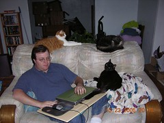 10242005 022 (Ludeman99) Tags: black cat mouse laptop sofa loveseat sedated jesushowmanycatsdoyouhave
