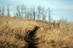 follow me (The 10 cent designer) Tags: calgary nosehillpark ilikegrass